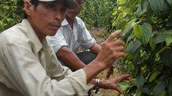 Đổi mới hoạt động Hội ở Hoài Nhơn: Đưa giải pháp, không nói suông