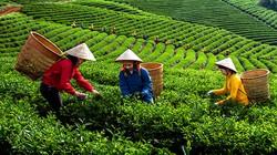 Phân bón Văn Điển chăm chút đồng đất Thái Nguyên