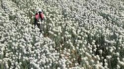 Thăm nông trang Israel ngỡ như... lạc vào vườn địa đàng