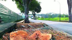 Nhìn ra thế giới: Chặt cây trái phép bị phạt 1,1 triệu USD