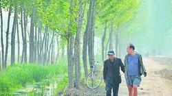 Hai cụ ông khuyết tật dành 10 năm trồng hơn 10.000 cây xanh