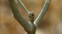 Chuyện trồng cây, chặt cây ở Ta và ở Tây
