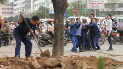 Vụ 6.700 cây xanh: Đình chỉ công tác 3 cán bộ Sở Xây dựng Hà Nội