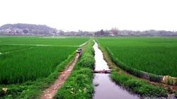 Ấm nồng hương lúa xanh trong mưa phùn tháng Hai...