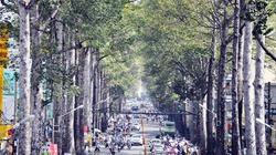 """Người Sài Gòn """"trốn"""" nắng dưới những hàng cây cổ thụ"""