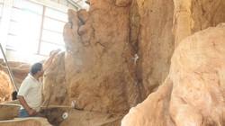 """Chiêm ngưỡng bộ rễ cây """"cổ phật"""" 30 tấn ở Sóc Trăng"""