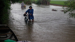 Thủy điện xả lũ nhấn chìm hàng nghìn ha lúa
