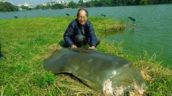 Thực hư thông tin cụ rùa Hồ Gươm qua đời