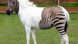 Những động vật lai có vẻ ngoài kỳ quặc 'khó đỡ'