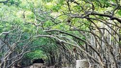 """Đặt chân đến """"vương quốc khỉ"""" trên ốc đảo xanh ở Sài Gòn"""