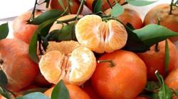 Dấu hiệu nhận biết cam Canh ta và cam Trung Quốc