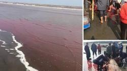 Thực hư chuyện cá voi dạt vào bờ bị ngư dân xẻ thịt