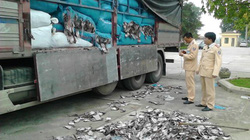 Hơn 20 tấn mực khô hôi thối đi xe tải về Hà Nội