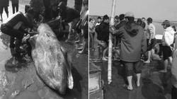 Vụ cá voi dạt vào biển Nam Định: Có hay không việc xẻ thịt bán?