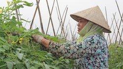 """Làm nông thôn mới  theo """"chất Yên Lạc"""""""