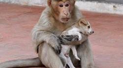 Cảm động chú khỉ cưu mang chó như con