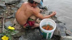 Tiễn ông Táo: Người thả cá phóng sinh, kẻ kéo lưới thu về