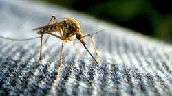 Tại sao con người không xóa sổ loài muỗi?