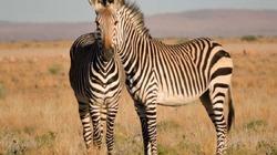 Theo chân nhiếp ảnh 'săn lùng' khoảnh khắc kỳ thú của động vật