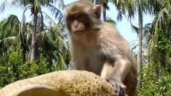 """Đến Nha Trang, ra Hòn Lao – """"hoa quả sơn"""" của khỉ giữa biển khơi"""