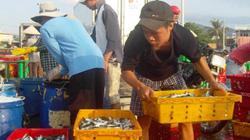 Ninh Thuận: Đầu năm ngư dân trúng đậm cá nục