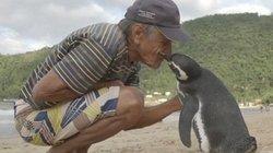 Chim cánh cụt bơi 8.000 km về thăm ân nhân