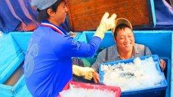 18.000 đồng/ kg cá nục, ngư dân thu về gần nửa tỉ đồng