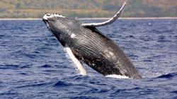 Top 10 loài cá voi nặng nhất thế giới