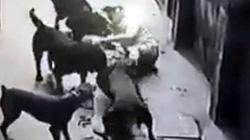 Gần 400.000 người bị chó cắn mỗi năm