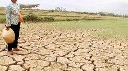 """""""Sao cứ khăng khăng giữ lúa vùng nhiễm mặn?"""""""