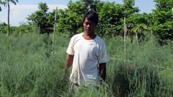 Hạn hán ảnh hưởng đến phong trào nông dân giỏi