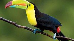 Top 10 loài chim đẹp nhất thế giới
