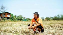 Thái Lan tìm cách quên cây lúa
