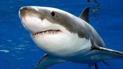 Bí mật về loại quái vật khiến cá mập lớn sợ... mất mật