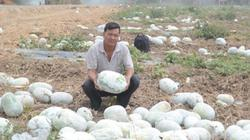 Nông sản ế ẩm: Nông dân loay hoay, huyện bó tay, thương lái lắc đầu
