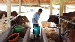 Mua nước ngọt 100.000 đồng/m3 để... bò uống