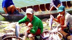 Sắp dừng cho vay chuỗi liên kết dọc cá tra