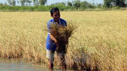 FAO hỗ trợ canh tác nông nghiệp thích ứng với biến đổi khí hậu