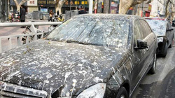 TQ: Dân khốn khổ vì mưa phân chim