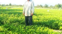 Ninh Thuận: 492ha đất sử dụng hệ thống tưới tiết kiệm