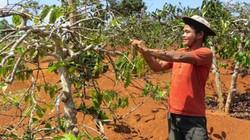 Các giải pháp chuyển đổi cây trồng chống hạn