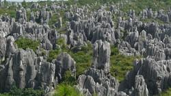 10 khu rừng đẹp nhất thế giới