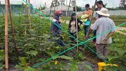 Bỏ lúa trồng rau, thu nhập 270 triệu đồng/ha