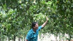 """Gia Lai: """"Bí ẩn"""" cây chanh dây và các thương lái Trung Quốc"""