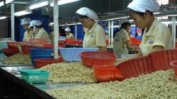 Việt Nam dự tính xuất khẩu thiết bị chế biến điều