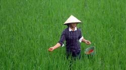 Thời tiết ấm lên, chăm sóc lúa và rau thế nào?