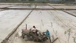 Quảng Ngãi: Nông dân đón năm mới ngoài đồng