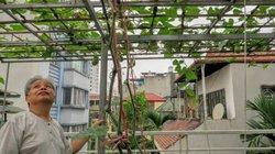 """Ngưỡng mộ sân thượng với cây trái đủ loại ăn quanh năm của """"lão nông phố"""" Hà Nội"""
