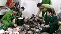 Hà Tĩnh: Bắt đầu nậu chứa gần 50 cá thể khỉ và chồn đông lạnh