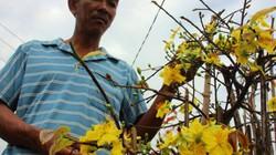 Nhà nông đất võ điêu đứng với hoa Tết